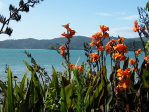 Canna Indica - Image courtesy of Weed busters